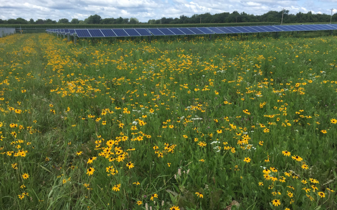 Large Solar Update: Richland County Solar Project